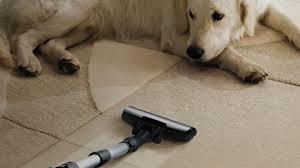 Remove Pet Stain